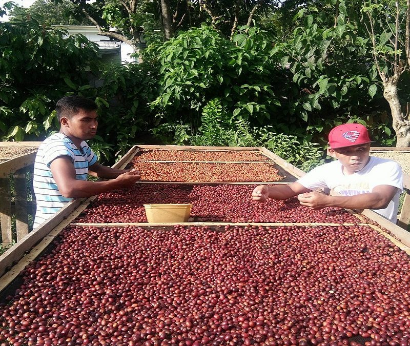 Greentropics Coffee Enterprise: Providing Livelihood to the B'laans