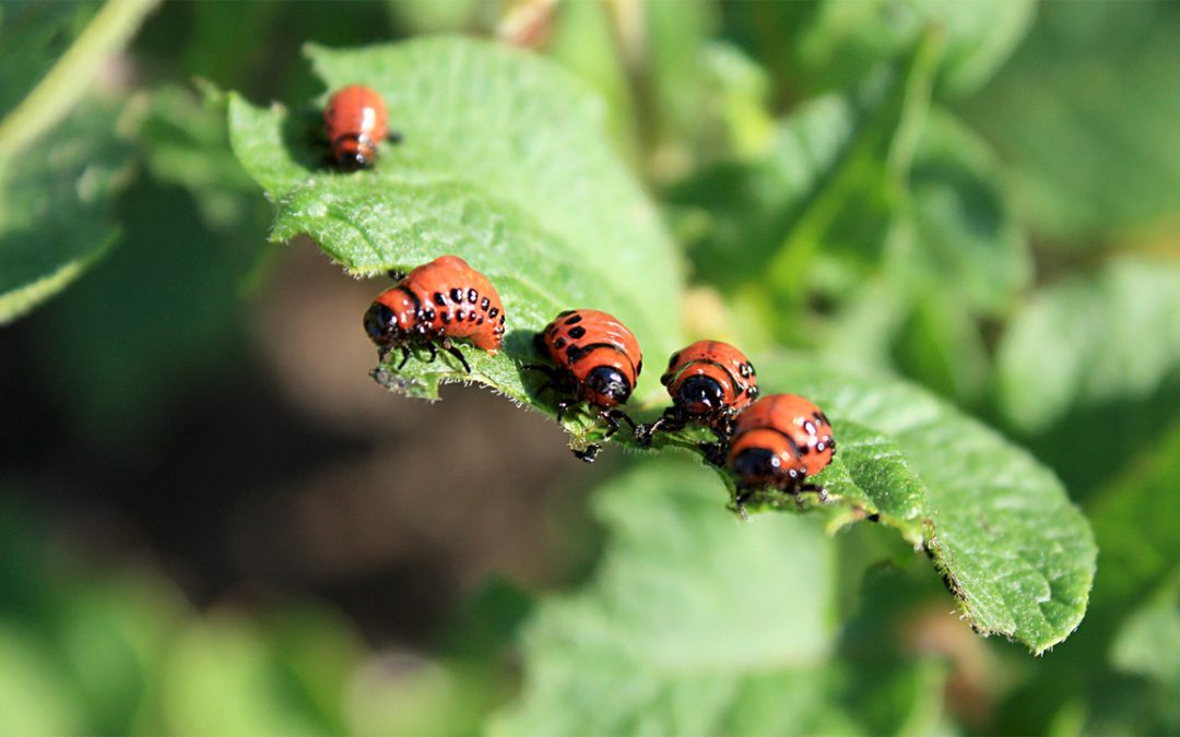 Pest and Disease Busters from the Wild